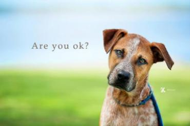 """Image result for are you okay dog"""""""